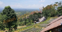 Bali Strawberry Farm and Restaurant Business for Sale